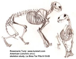 American Lion Skeleton study 1 by tursiart