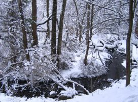 Snowy Stream by jbescup