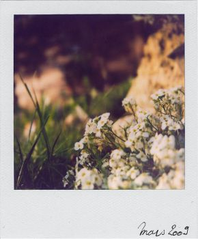 Tiny flowers by Cristel-m