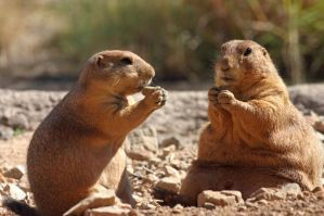 Prarie Dogs by philichino