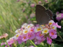 Butterfly_pink_6tr by nurisagaltici