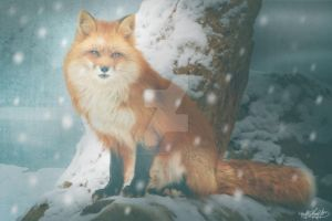 Winter Fox by MADmoiselleMeli