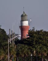 Gull using Mayport lighthouse by drewii57