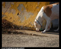 Sniffing Around I by Dominick-AR