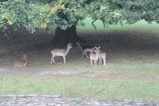 Curiosity and the Deer by NIAB-Photography