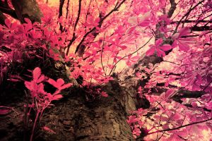 pink leaves by reesy1080