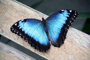 Your not alone: blue butterfly by Batencio4882
