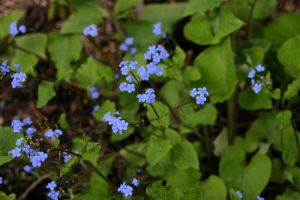 Tiny Flowers by looking4myleopard