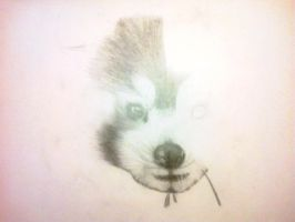 Red Panda 2 by Rachie-D18