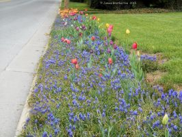 Roadside Garden by jim88bro