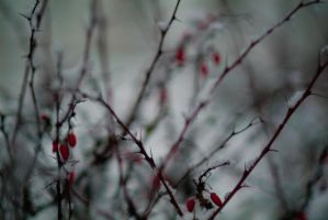 Snow and thorns by RussellWarner