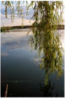 weeping willow by Lk-Photography