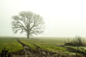 Foggy Morning by Walden-Photography