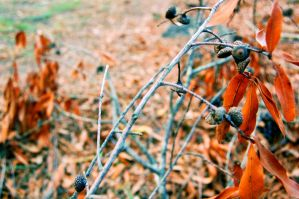 Twigs, Leaves, and Acorns by YouTheWho