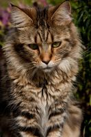 Odypollo 7 by cinorici