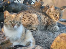 cats by andi40