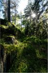Valaam Islands...  _76 by my-shots