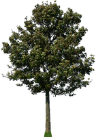 tree 47 png by gd08