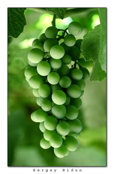 Grapes by sergey1984