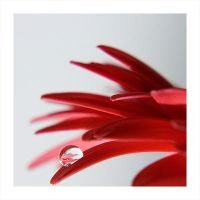 the drop by RobinKater by PhotographersClub
