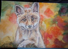 Fox watercolour by Kaikoura