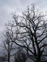 Bare tree branches 2 by dull-stock