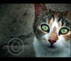 occhi di gatto by ValentinaKallias