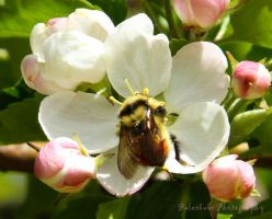 Busy As A Bee by Kaptive8