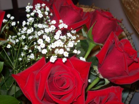 Red Roses 3 by Poopyhead613