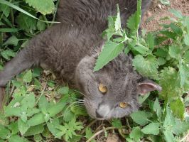i haz catnip addictshun by FantasyStock