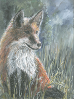 Fox in the grass by acrylicwildlife