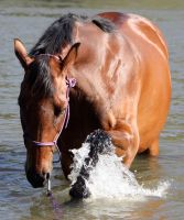 Horseys River 167 by aussiegal7