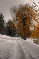 walking through the snow by Iulian-dA-gallery