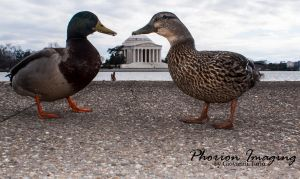 Tourists by PhorionImaging