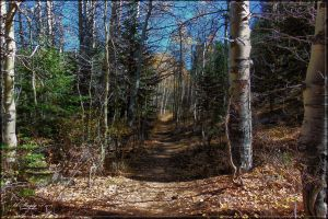 The Path Between the Trees HDR by lil-Mickey