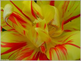 In a tulip by Iuliaq
