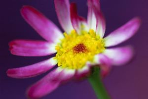 Pink dotted flower... by Mims1975b