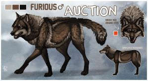 Tall, Dark, and Handsome Brown Wolf Auction CLOSED by KFCemployee