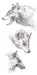 Wolves from Reference by Aetharius