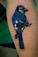 Bluejay by truth-is-absolution