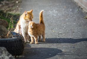 Mother cat and her kitten. by Eevl