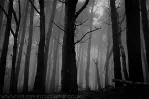 Haunted Woods III by VelesPhotos