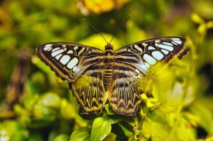 Butterflys by m-faccone