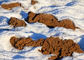 snow and soil by Mittelfranke