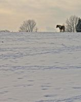Across snowy fields by muzzy500