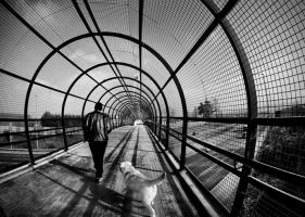 Wire tunnel by Treamus