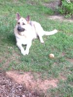 Mya with her ball by Mya101FoX