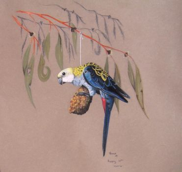 Pale-headed Rosella by Sasquatch69