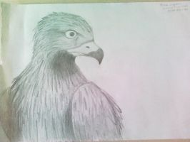 An eagle... I think. by Grayes