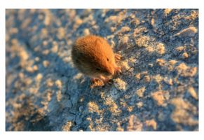 mouse by Puuronen